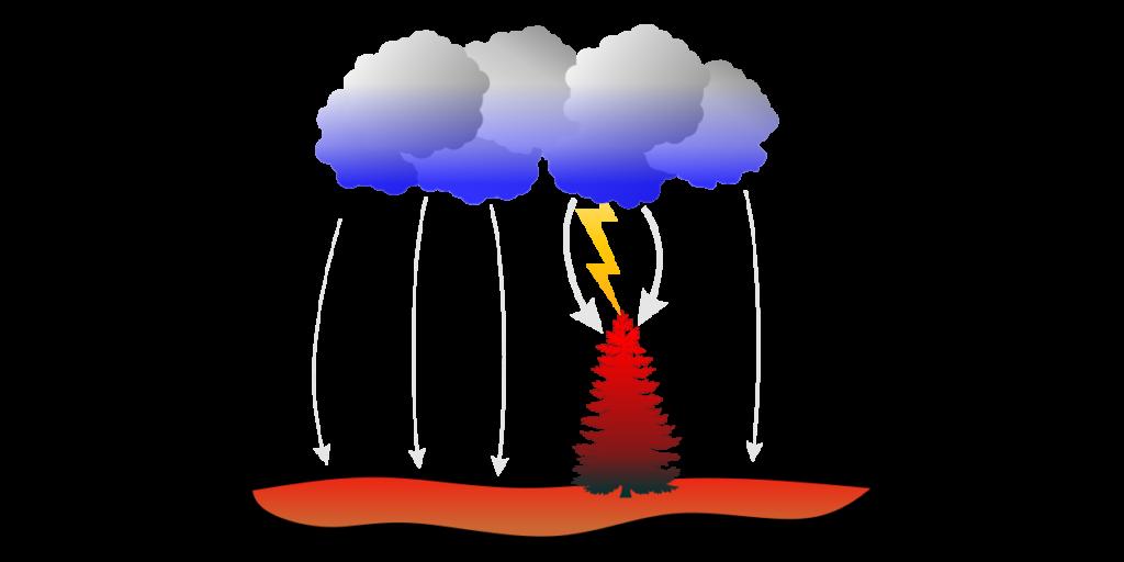 Dlaczego błyskawice uderzają w samotne drzewa?
